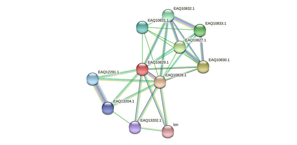 RB2654_21713 protein (Maritimibacter alkaliphilus) - STRING interaction network