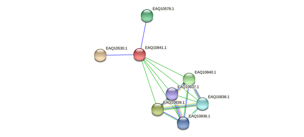 RB2654_21773 protein (Maritimibacter alkaliphilus) - STRING interaction network