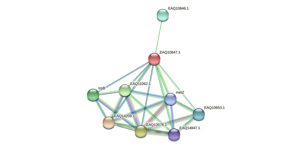 RB2654_21803 protein (Maritimibacter alkaliphilus) - STRING interaction network