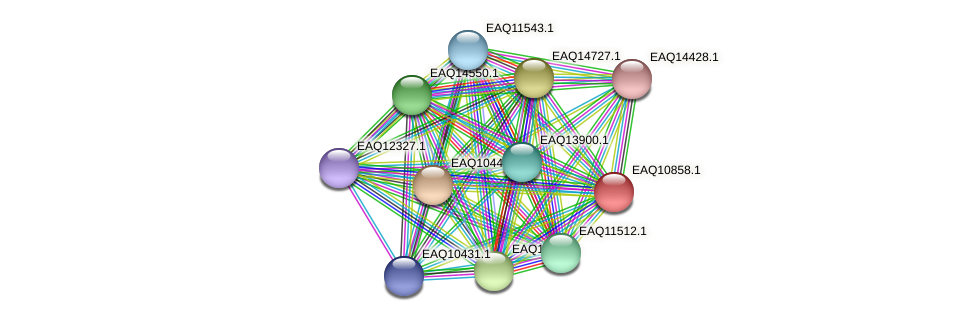 RB2654_21858 protein (Maritimibacter alkaliphilus) - STRING interaction network