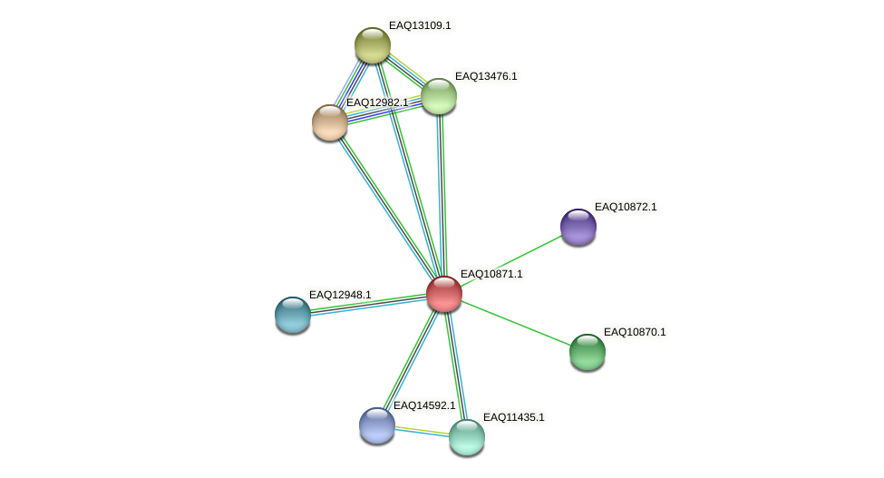 RB2654_21923 protein (Maritimibacter alkaliphilus) - STRING interaction network