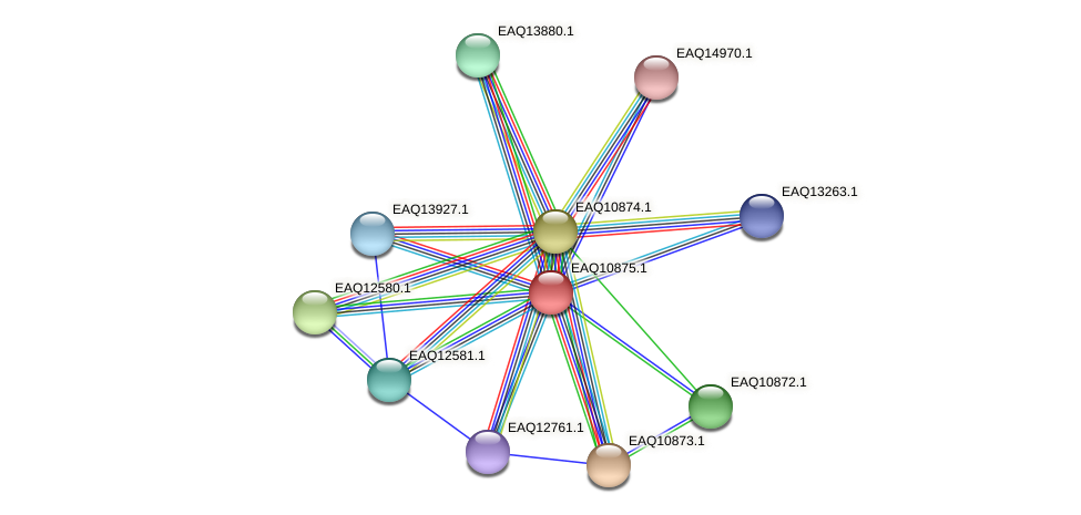 RB2654_21943 protein (Maritimibacter alkaliphilus) - STRING interaction network