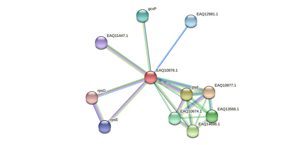RB2654_21948 protein (Maritimibacter alkaliphilus) - STRING interaction network
