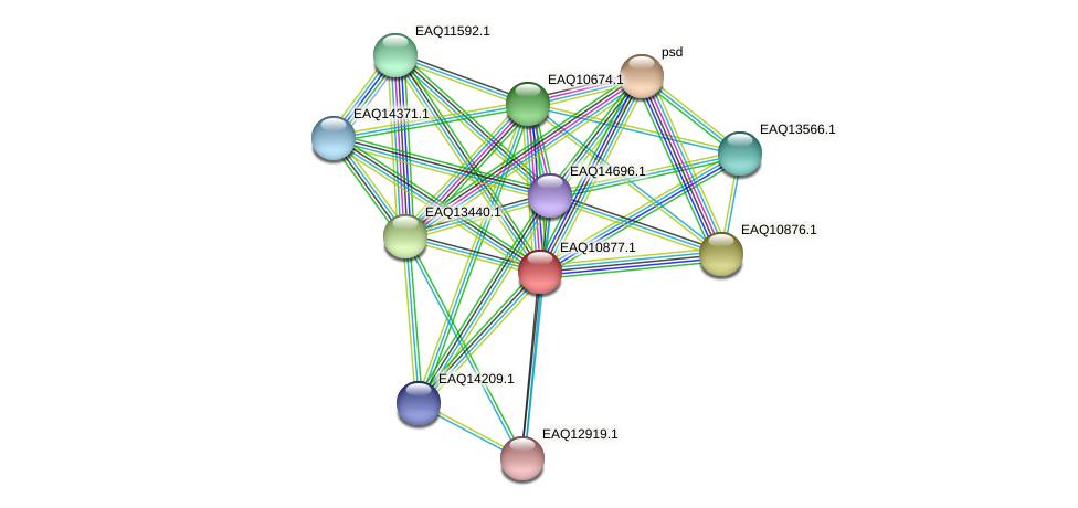 RB2654_21953 protein (Maritimibacter alkaliphilus) - STRING interaction network