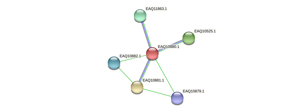 RB2654_21968 protein (Maritimibacter alkaliphilus) - STRING interaction network