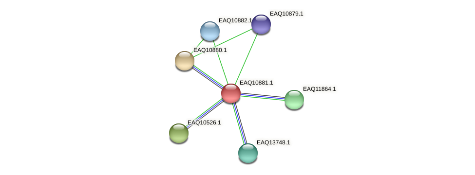 RB2654_21973 protein (Maritimibacter alkaliphilus) - STRING interaction network