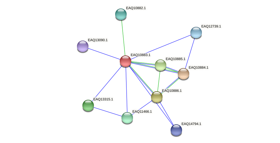 RB2654_21983 protein (Maritimibacter alkaliphilus) - STRING interaction network