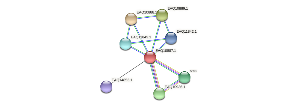 RB2654_22003 protein (Maritimibacter alkaliphilus) - STRING interaction network