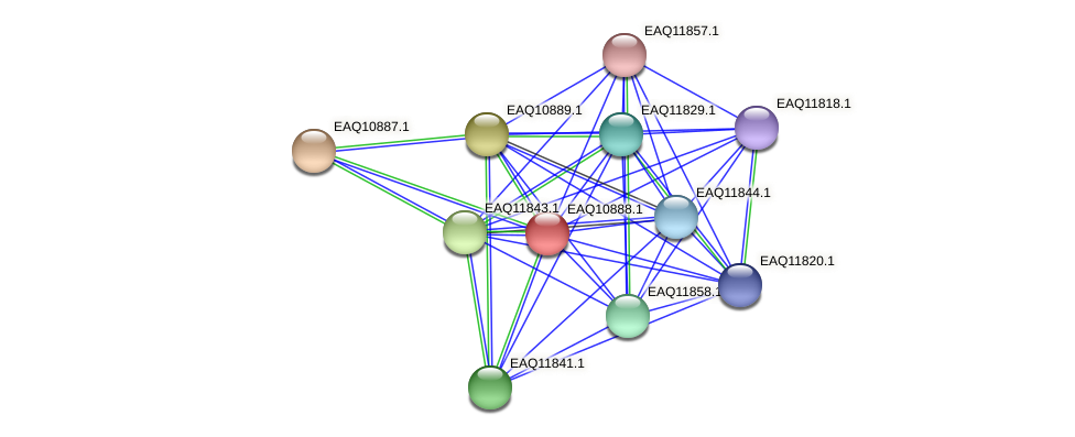 RB2654_22008 protein (Maritimibacter alkaliphilus) - STRING interaction network