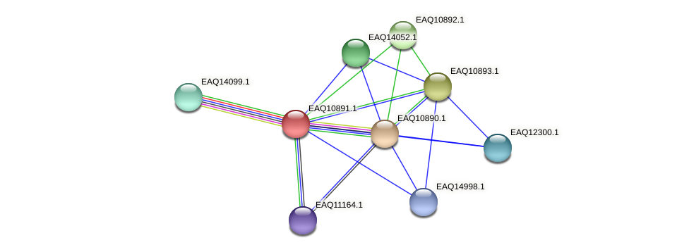 RB2654_22023 protein (Maritimibacter alkaliphilus) - STRING interaction network