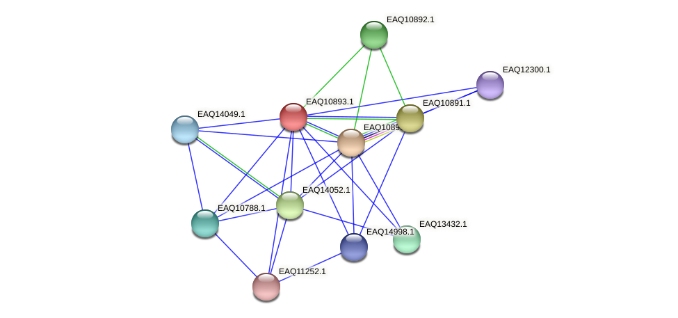 RB2654_22033 protein (Maritimibacter alkaliphilus) - STRING interaction network