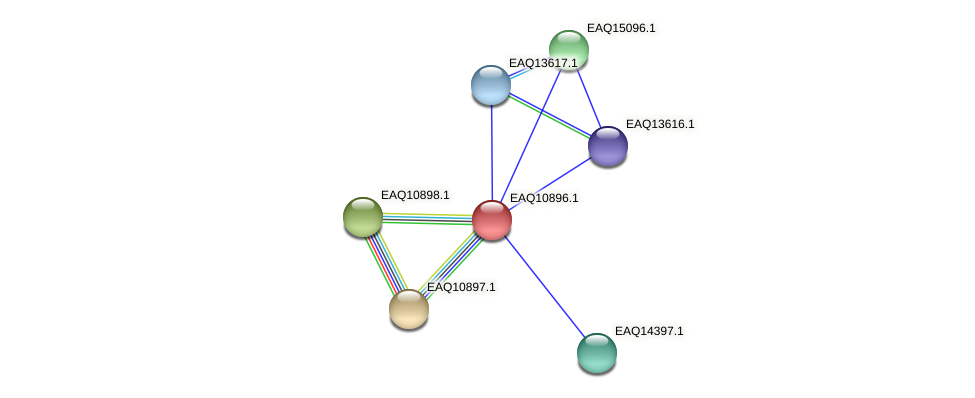 RB2654_22048 protein (Maritimibacter alkaliphilus) - STRING interaction network