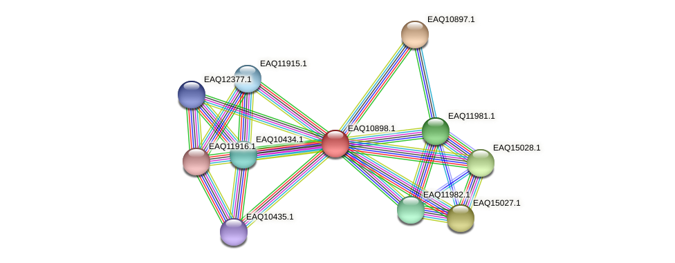 RB2654_22058 protein (Maritimibacter alkaliphilus) - STRING interaction network