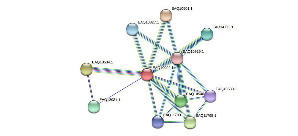 RB2654_22078 protein (Maritimibacter alkaliphilus) - STRING interaction network