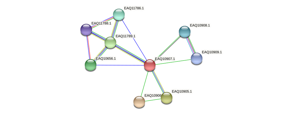 RB2654_22103 protein (Maritimibacter alkaliphilus) - STRING interaction network