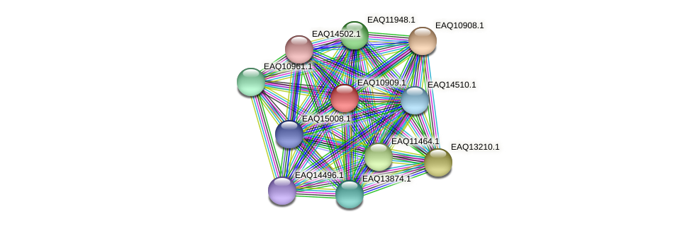 RB2654_22113 protein (Maritimibacter alkaliphilus) - STRING interaction network
