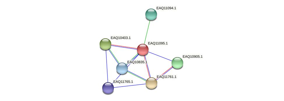 RB2654_22708 protein (Maritimibacter alkaliphilus) - STRING interaction network