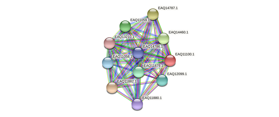 RB2654_22733 protein (Maritimibacter alkaliphilus) - STRING interaction network