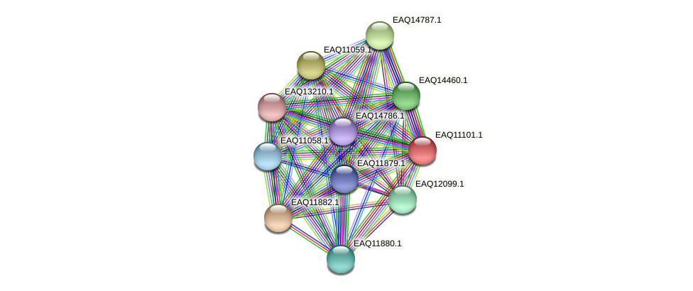 RB2654_22738 protein (Maritimibacter alkaliphilus) - STRING interaction network