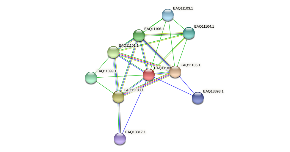 RB2654_22743 protein (Maritimibacter alkaliphilus) - STRING interaction network