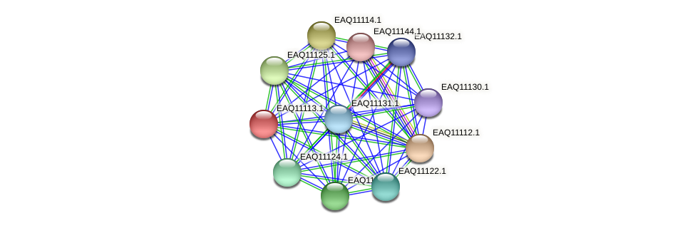 RB2654_22798 protein (Maritimibacter alkaliphilus) - STRING interaction network