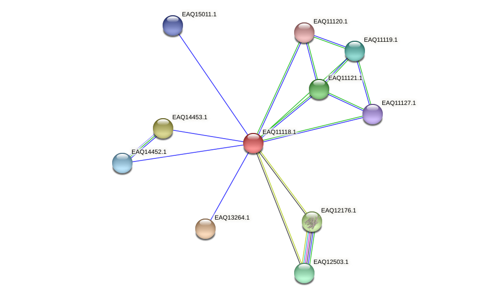 RB2654_22823 protein (Maritimibacter alkaliphilus) - STRING interaction network