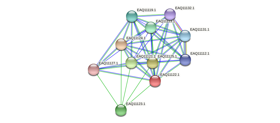 RB2654_22843 protein (Maritimibacter alkaliphilus) - STRING interaction network