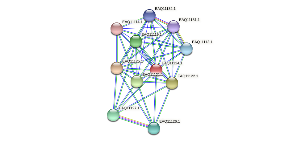 RB2654_22853 protein (Maritimibacter alkaliphilus) - STRING interaction network