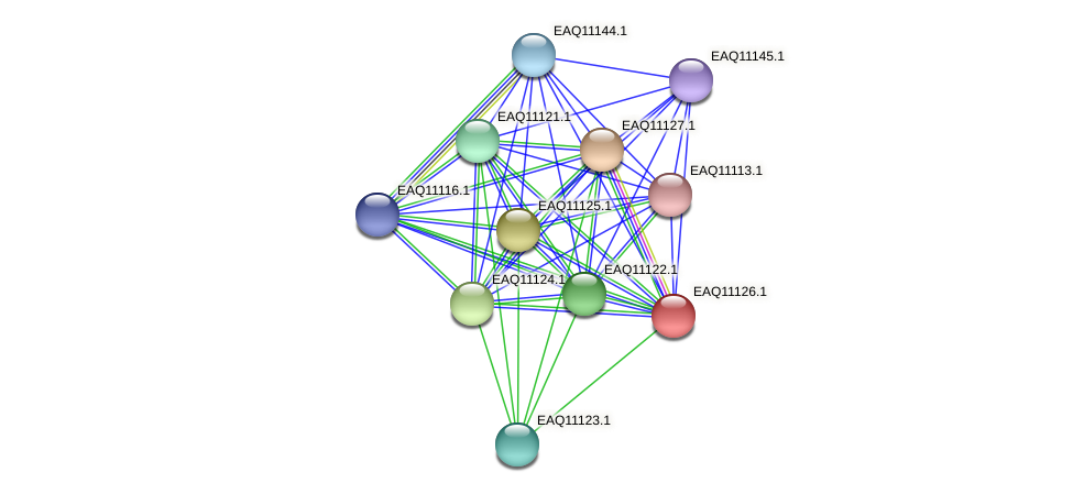 RB2654_22863 protein (Maritimibacter alkaliphilus) - STRING interaction network