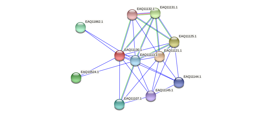 RB2654_22883 protein (Maritimibacter alkaliphilus) - STRING interaction network