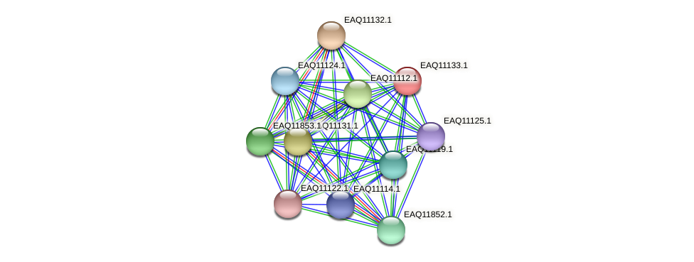 RB2654_22898 protein (Maritimibacter alkaliphilus) - STRING interaction network