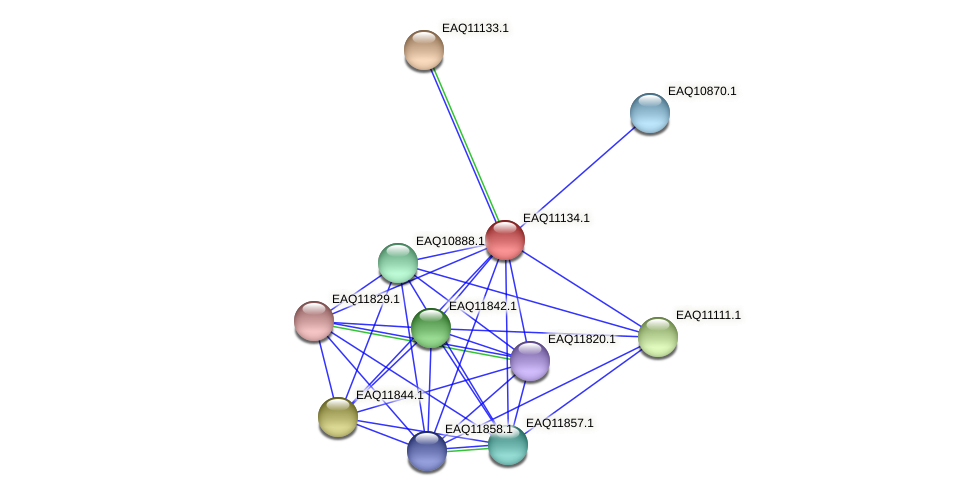 RB2654_22903 protein (Maritimibacter alkaliphilus) - STRING interaction network