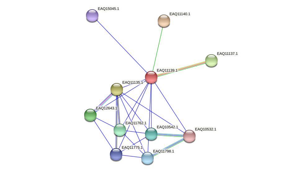 RB2654_22928 protein (Maritimibacter alkaliphilus) - STRING interaction network