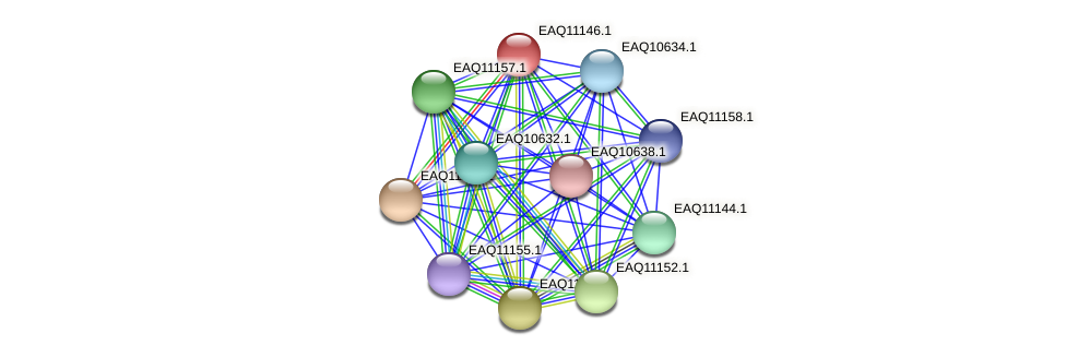 RB2654_22963 protein (Maritimibacter alkaliphilus) - STRING interaction network