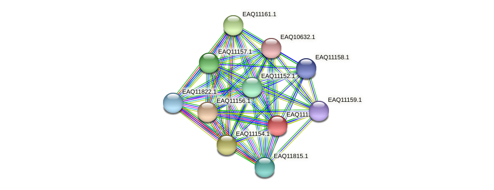 RB2654_23008 protein (Maritimibacter alkaliphilus) - STRING interaction network