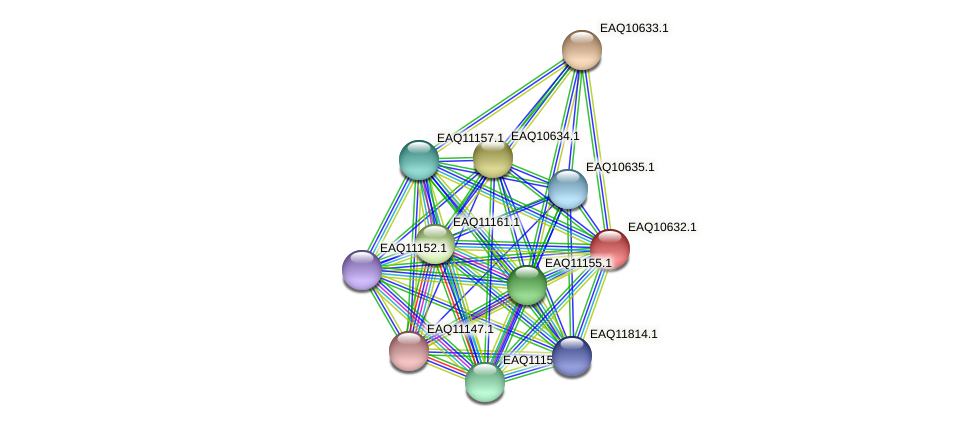 RB2654_23043 protein (Maritimibacter alkaliphilus) - STRING interaction network