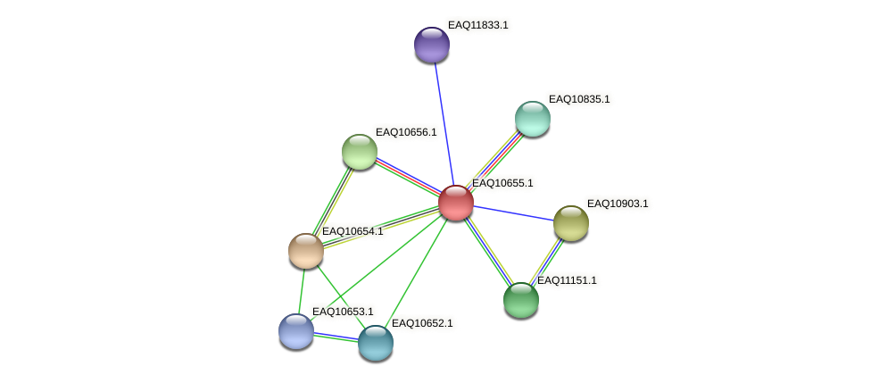 RB2654_23158 protein (Maritimibacter alkaliphilus) - STRING interaction network