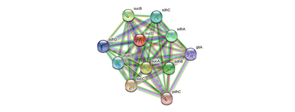 sucD protein (Rickettsia felis) - STRING interaction network
