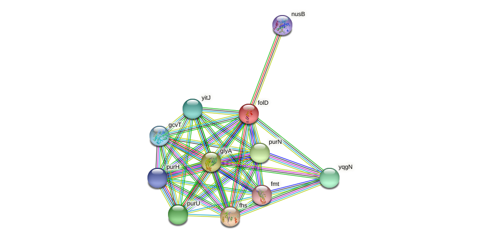 folD protein (Bacillus pumilus) - STRING interaction network