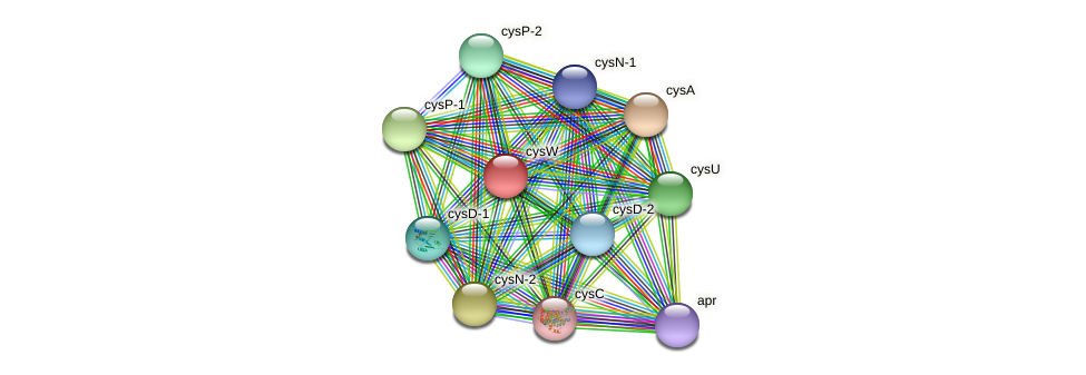 cysW protein (Geobacter daltonii) - STRING interaction network
