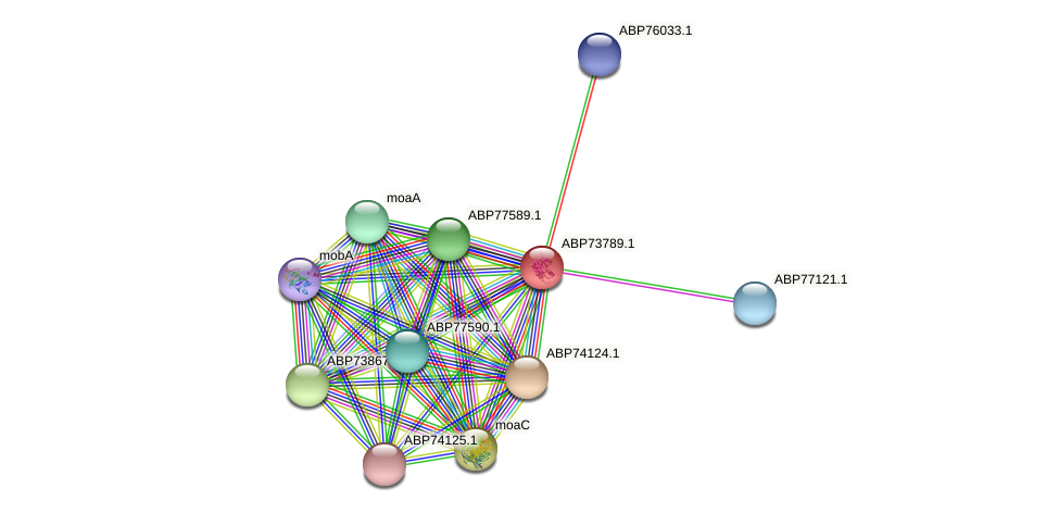 ABP73789.1 protein (Shewanella putrefaciens) - STRING interaction network