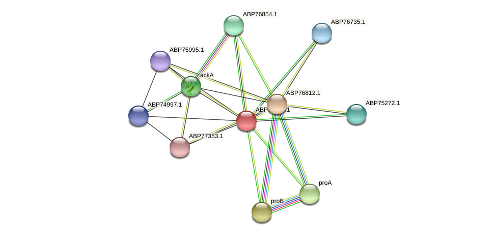 ABP73819.1 protein (Shewanella putrefaciens) - STRING interaction network
