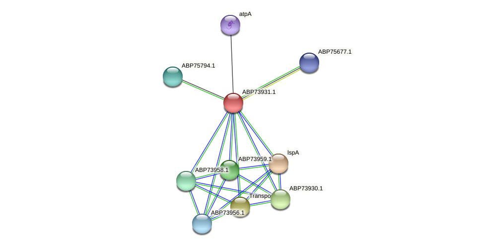 ABP73931.1 protein (Shewanella putrefaciens) - STRING interaction network