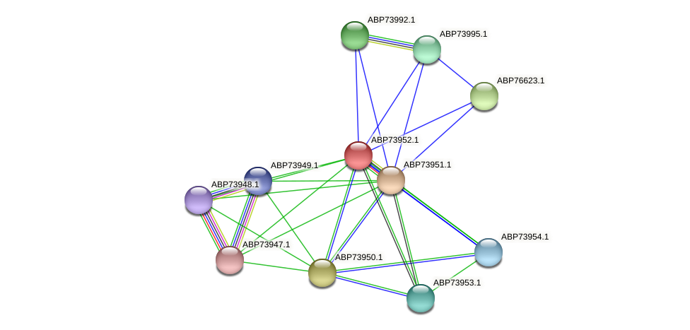 ABP73952.1 protein (Shewanella putrefaciens) - STRING interaction network
