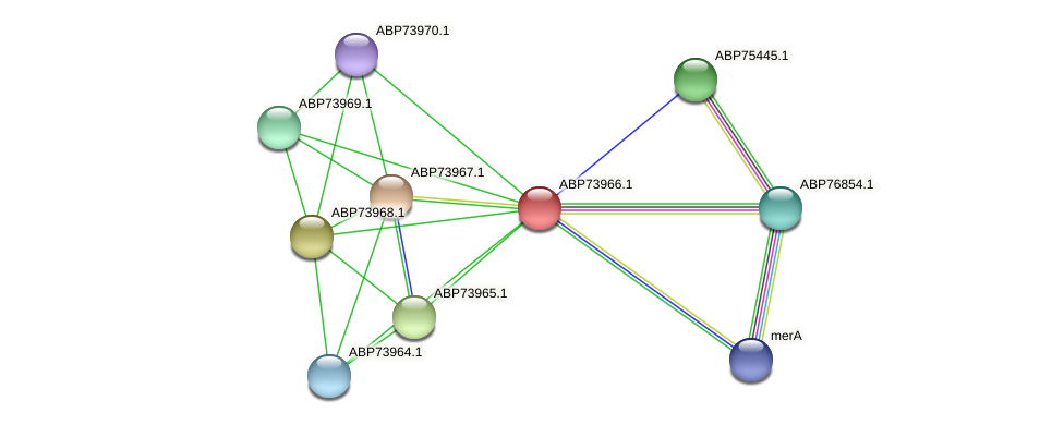 ABP73966.1 protein (Shewanella putrefaciens) - STRING interaction network