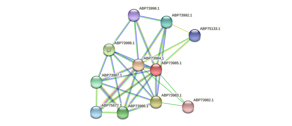 ABP73985.1 protein (Shewanella putrefaciens) - STRING interaction network
