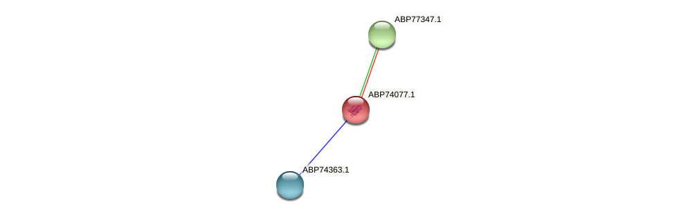 ABP74077.1 protein (Shewanella putrefaciens) - STRING interaction network