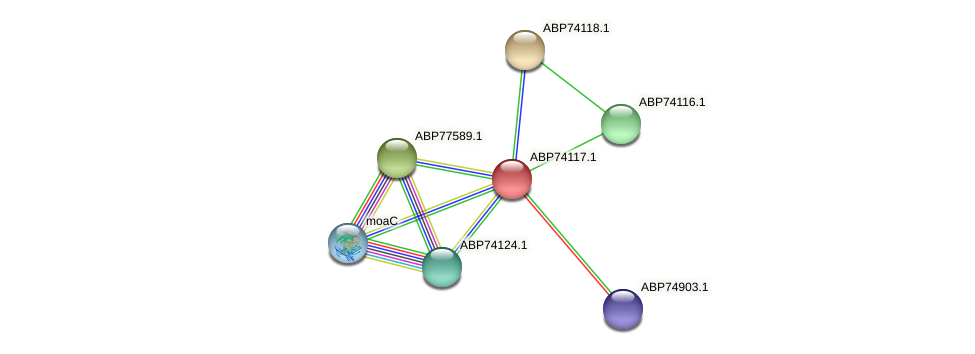 ABP74117.1 protein (Shewanella putrefaciens) - STRING interaction network