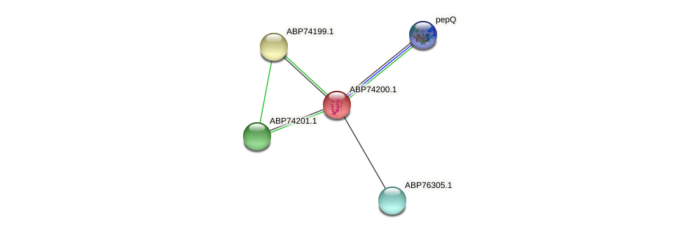 ABP74200.1 protein (Shewanella putrefaciens) - STRING interaction network