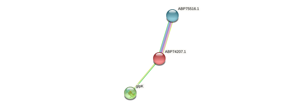 ABP74207.1 protein (Shewanella putrefaciens) - STRING interaction network
